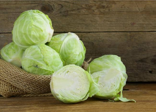 cabbage and fat loss