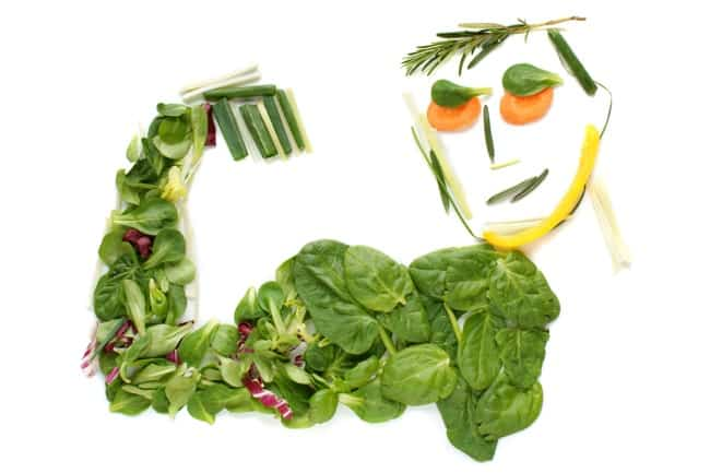 animal vs plant protein