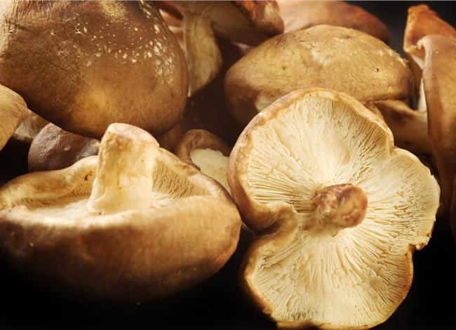 are mushrooms good for weight loss