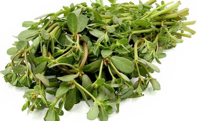 What is Purslane and is it Safe to Eat?