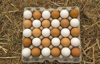 Are Brown Eggs More Nutritious and Healthier Than White Eggs?