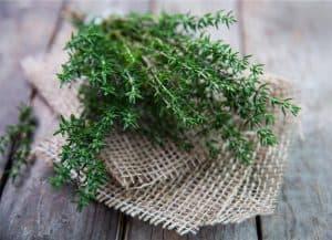 4 Amazing Health Benefits of Thyme Tea