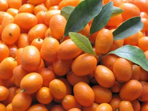 Amazing Health Benefits of Eating Kumquats (Evidence Based)
